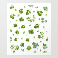 Herbs on White - Portrait Art Print