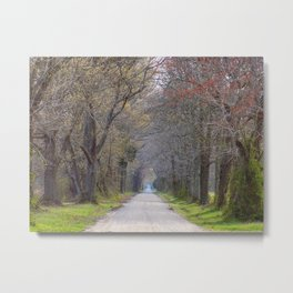 Trees parting the road | Wye Island, MD | Minimalist landscape photography Metal Print