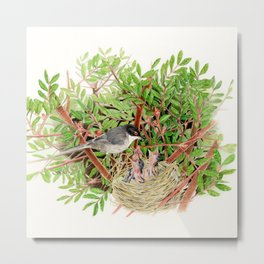 Sardinian Warbler - nesting bird on the Ligurian coast Metal Print