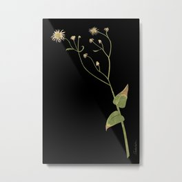 Collage of a Flowering Weed Metal Print