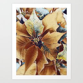 Autumn Poinsettia Art Print