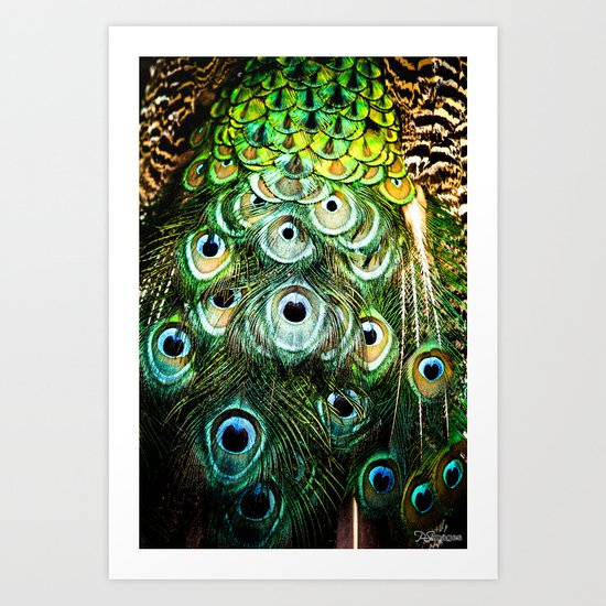 Feathers of a peacock  Art Print