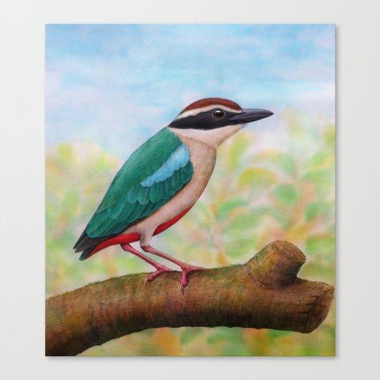Fairy Pitta Canvas Print