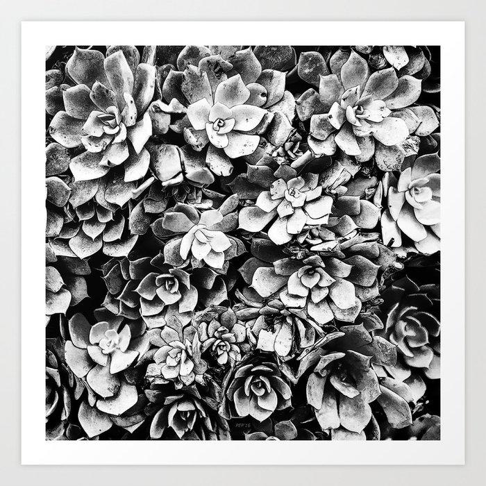 Black And White Plants Art Print