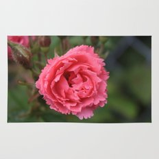 pink wild rose flower in green background. Floral photography. Rug