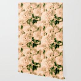 Romance and Ruffles beautiful flowers Wallpaper