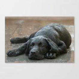 Labrador dog in the rain ! Canvas Print
