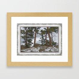 PINES ON ROCKY SNOW Framed Art Print