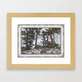 PINES ON ROCKY SNOW Framed Art Print