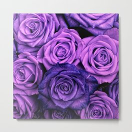 Purple Roses Metal Print