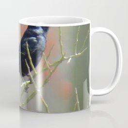 Phainopepla Coffee Mug