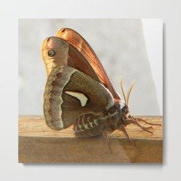 Redwood Moth Metal Print