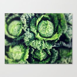 glorious green cabbages Canvas Print