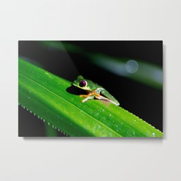 pathway to the red-eyed tree frog Metal Print