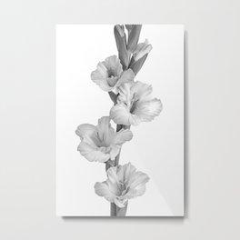Mono Gladioli Metal Print
