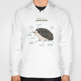 Anatomy of a Hedgehog Hoody