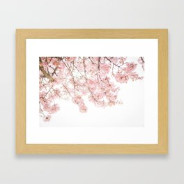 Pink Blooming Cherry Trees Framed Art Print