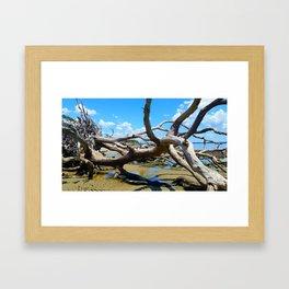 Driftwood Beach, Jekyll Island GA Framed Art Print