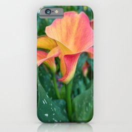 colored calla lily in the garden iPhone Case