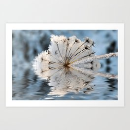 Frosted Cow Parsley  Art Print