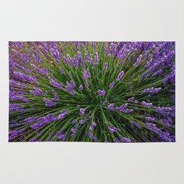 Lavender Field Of Dreams  Rug