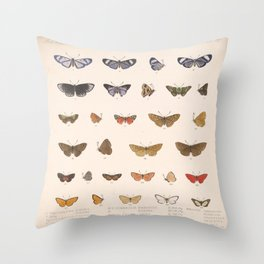 Vintage Hand Drawn Scientific Insect Anatomy Colorful Butterfly Illustration Throw Pillow