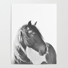 Stallion in black and white Poster