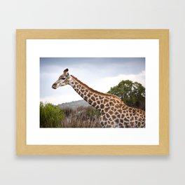 Beautiful close-up of Giraffe in South Africa Framed Art Print