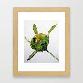 Ants on a Hosta bud Framed Art Print
