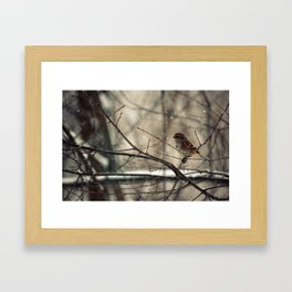 Winter friend. Framed Art Print