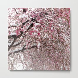 Elegant pink white nature snow cherry blossom floral Metal Print
