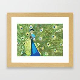 The Majestic Peacock Framed Art Print