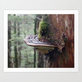 Magical Fungi World   Nature Photography Art Print