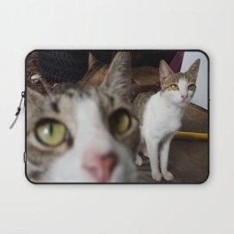 Back Yard Kitties  Laptop Sleeve