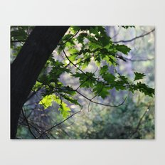 In The Shadow Of The Oak Canvas Print