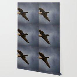 Storm Chaser - Bird flying in Sky Wallpaper
