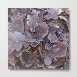 Fallen Oak Leaves Autumn Scene #decor #society6 #buyart Metal Print