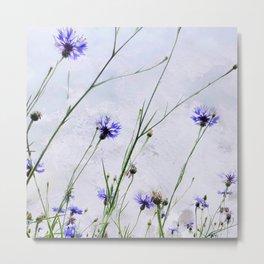 Cornflowers blue II Metal Print