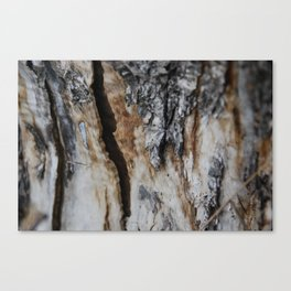 Cracked Wood Canvas Print