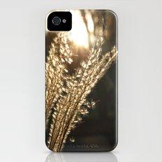 Grasses in the Sun iPhone (4, 4s) Slim Case