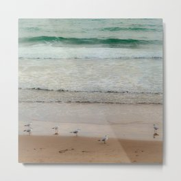 Seagulls at the beach Metal Print