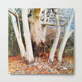 Mother Sycamore Embracing Her Children Metal Print