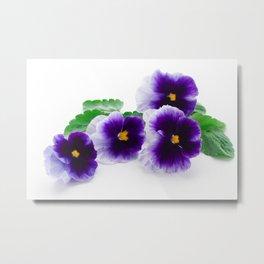 beautiful purple pansy  Metal Print