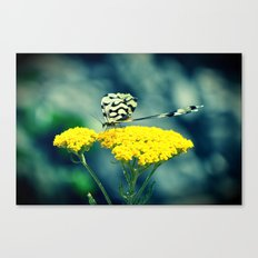 butterfly Canvas Print