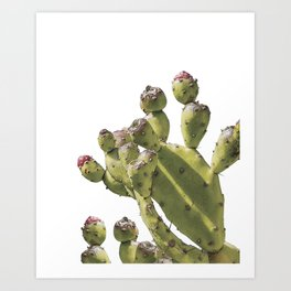 Prickly Pear Cactus, Cactus Art Print, Cactus Print, Botanical Decor, Natural History, Cactus Poster, Cactus Species, Botanical Prints, Plants, Botanical Art, Botanical, Botanicals, Nature, Prickly Pear Art Print