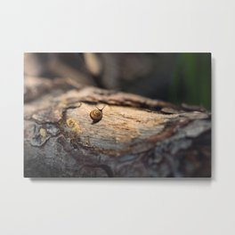 His perfect world Metal Print