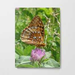 Great Spangled Fritillary Butterfly 2 Metal Print