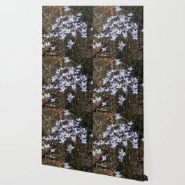 Wild Flowers Bluets Wallpaper