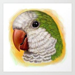 Green quaker parrot realistic painting Art Print