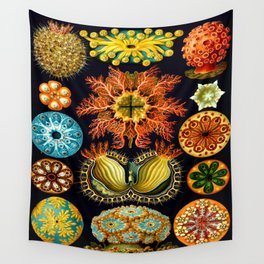 Sea Squirts (Ascidiacea) by Ernst Haeckel Wall Tapestry